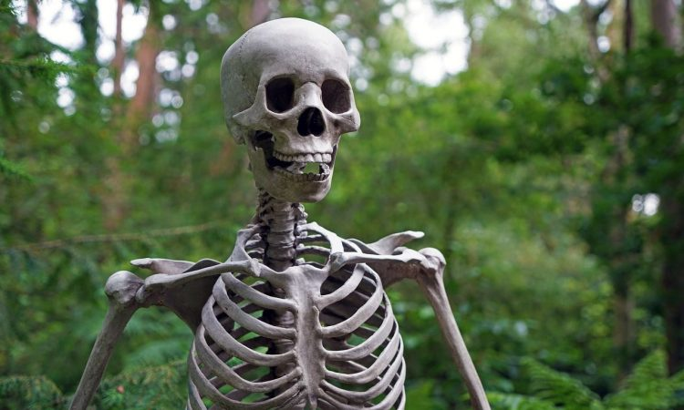skeleton-1522620_1280_min